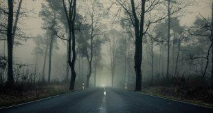conduce seguro con niebla