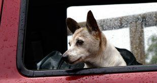 Viajar con perro en el coche normativa y dudas frecuentesViajar con perro en el coche normativa y dudas frecuentes
